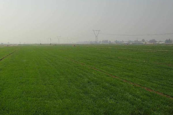 四季青草坪的优缺点分析