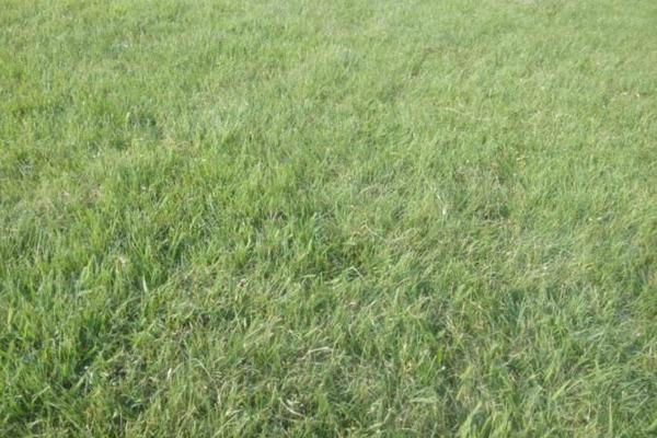 野牛草多少钱一平米