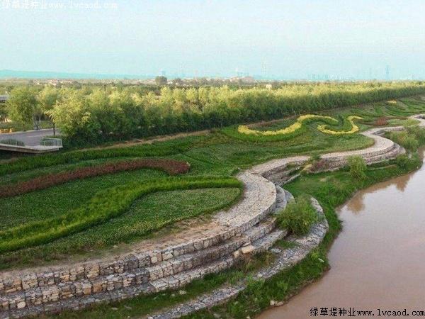 草坪在河岸绿化工程中的应用