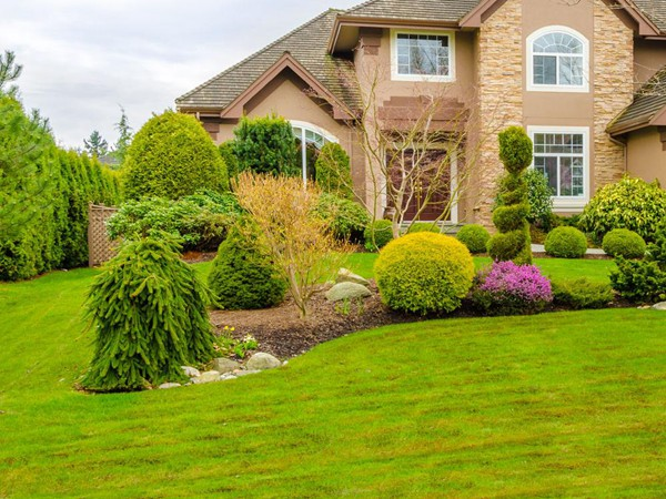 别墅庭院草坪种什么草,建议选择这几种