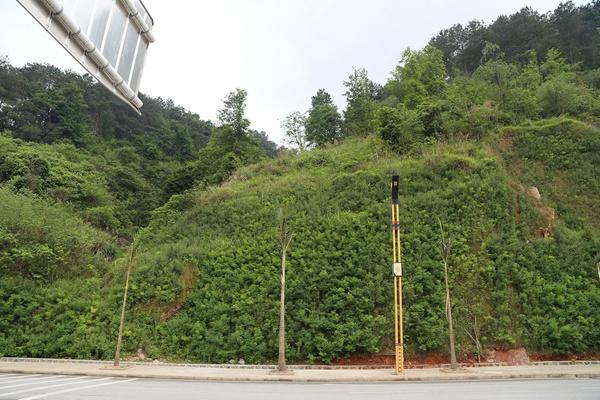 草坪在边坡复绿工程中的应用