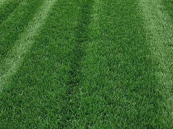 百慕大草坪后期养护技术及注意事项