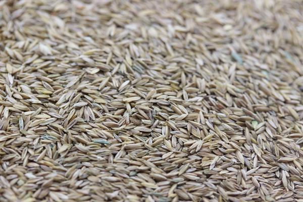 早熟禾种子的零售价格