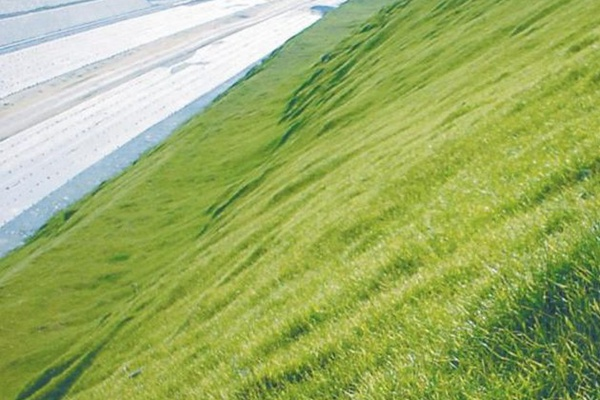 护坡草籽有哪些品种,怎么种植?