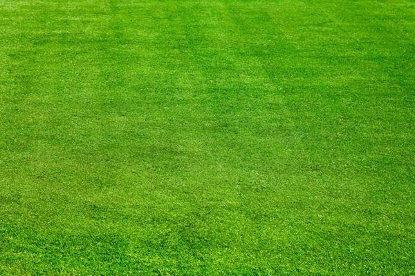 夏季高羊茅草坪种植需要注意些什么?