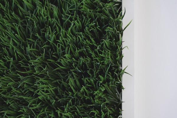 草坪施肥指南:什么时候施,怎么施,施什么肥?