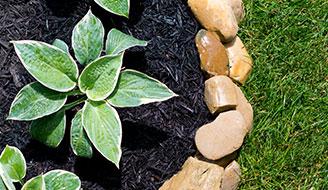 如何用覆盖物阻止花园里的杂草生长