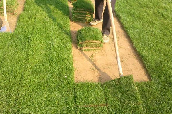 暖季型草坪都有哪些?